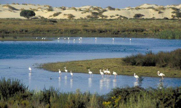 La justicia europea falla que España no tomó las medidas necesarias para proteger Doñana
